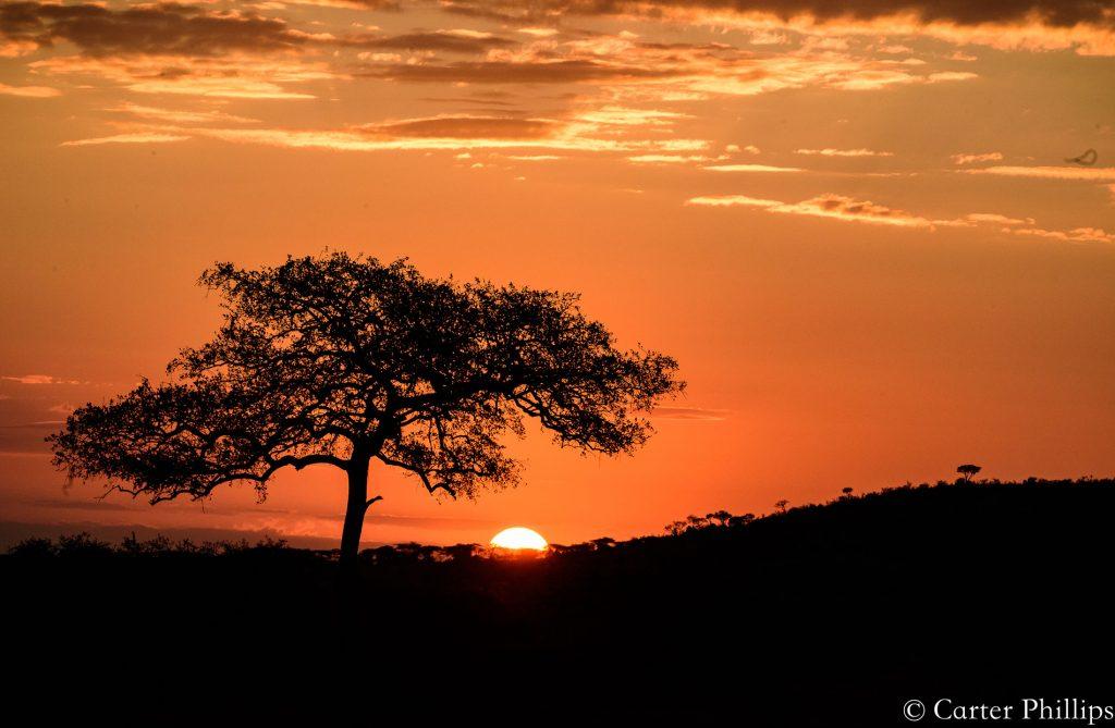 Africa Tanzania Sunrise Acacia Tree