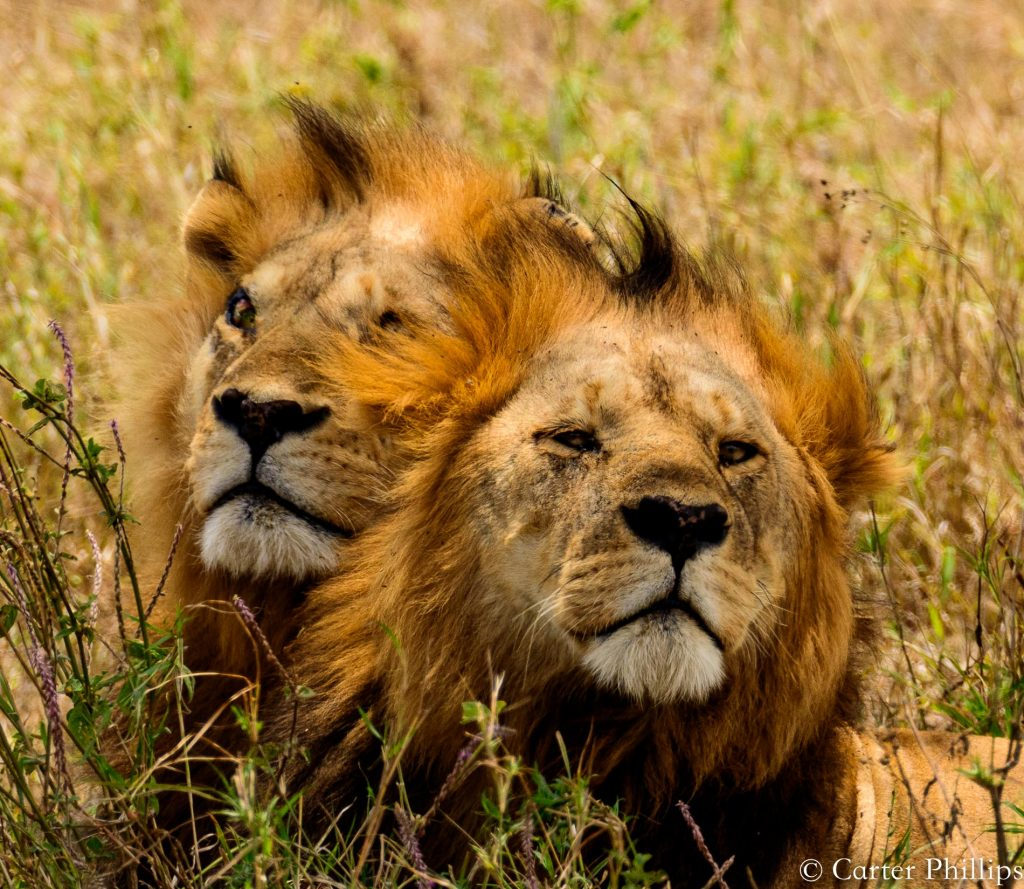Two Lions Africa