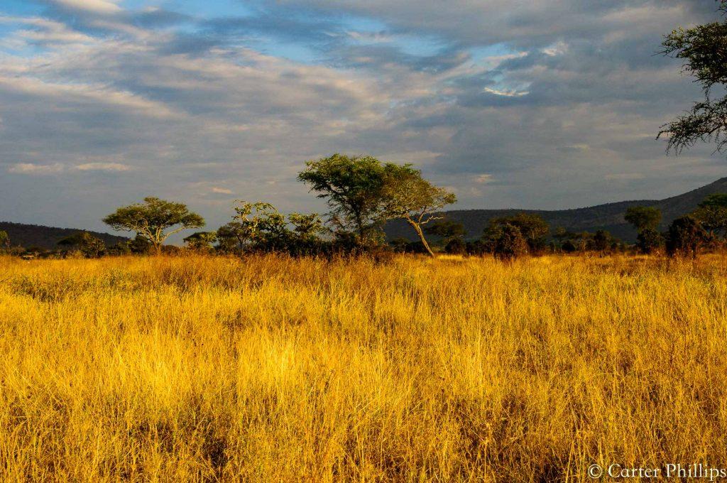 Africa-8961