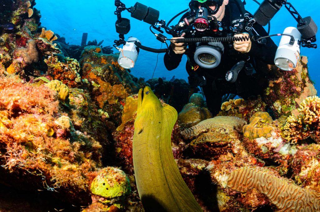 Bonaire Green Moray Eel